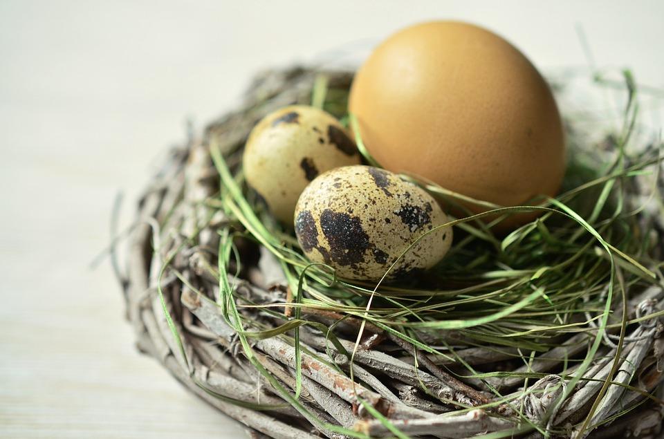 egg-1272782_960_720